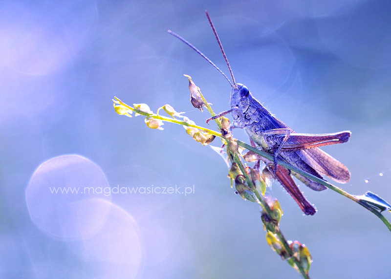 Photograph The Blue Cavalier by Magda Wasiczek on 500px