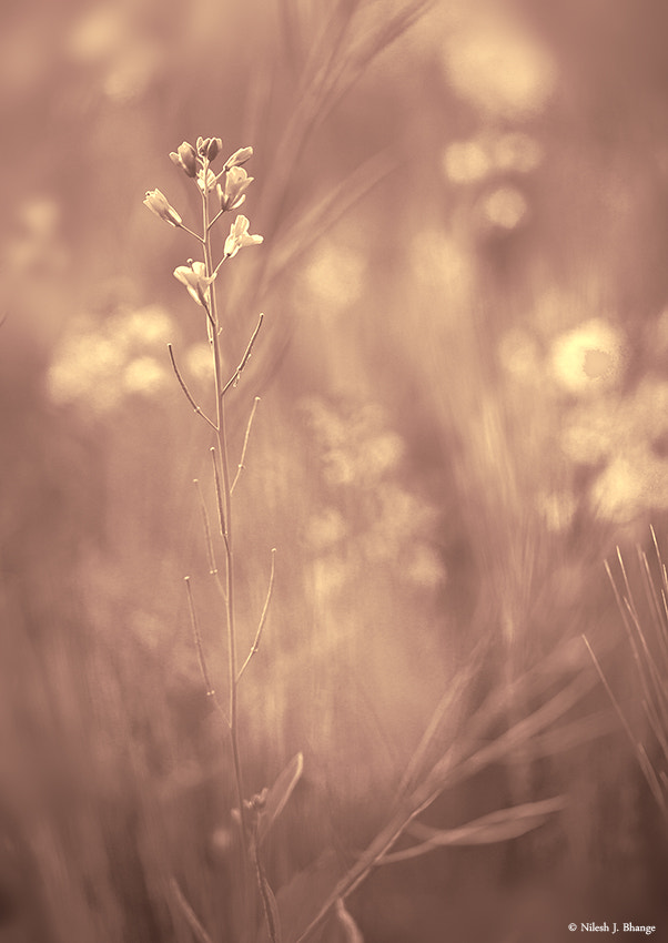 Photograph The delicate flowers by Nilesh  on 500px