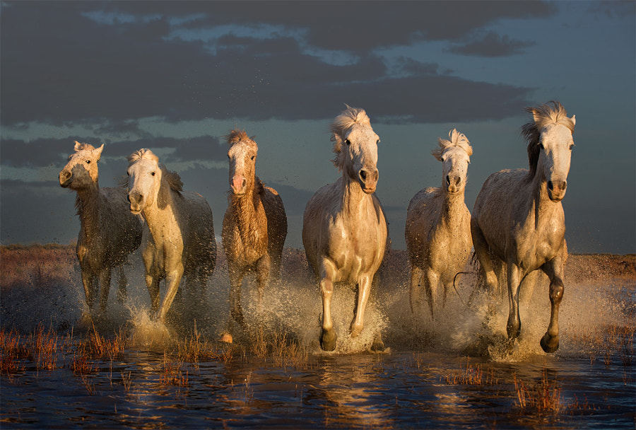 6 White Horses by Adrian Lines on 500px.com