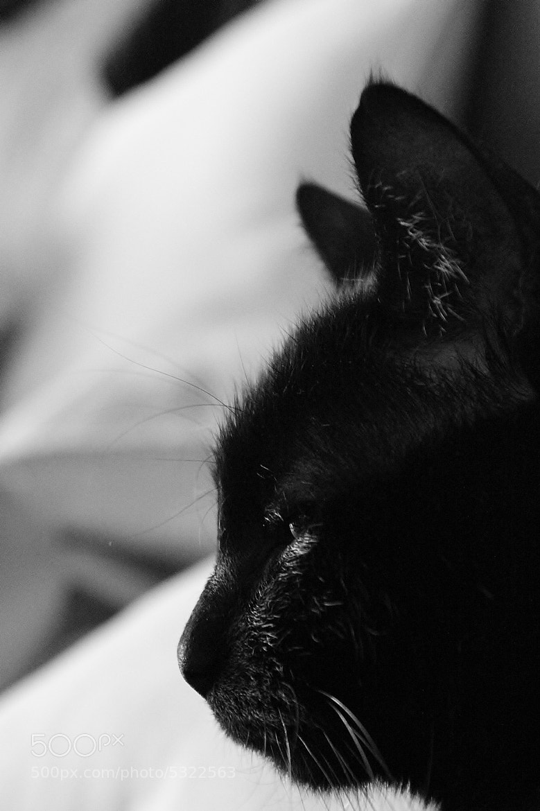 Photograph The rabbit cat  by Marie BALLEFIN on 500px