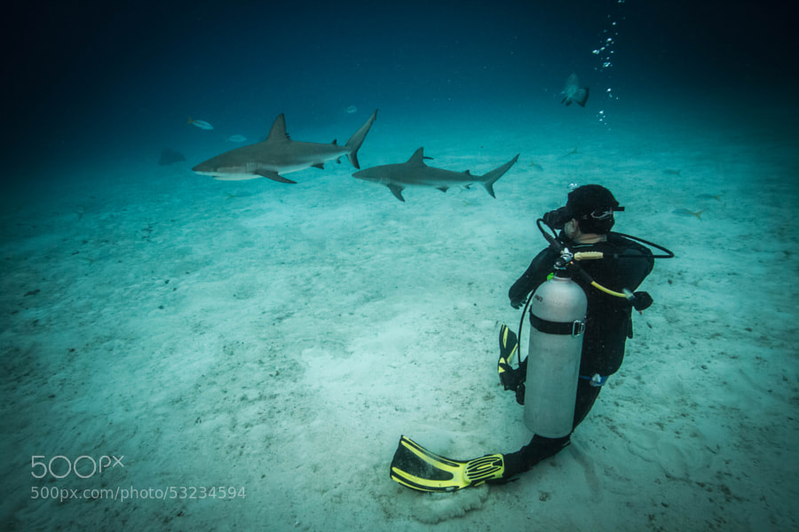 Photograph Diver and Sharks by Carlos Grillo  on 500px