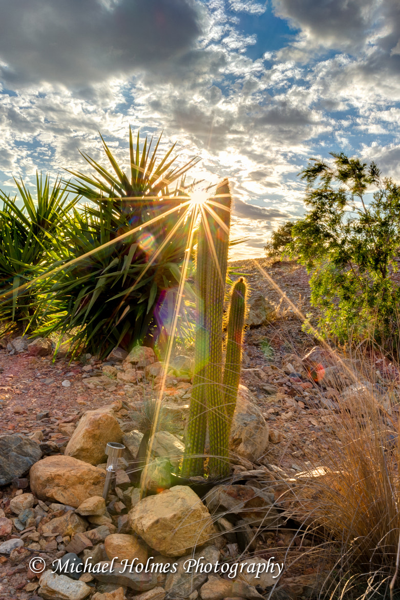 Photograph Cactus rays by Michael Holmes on 500px