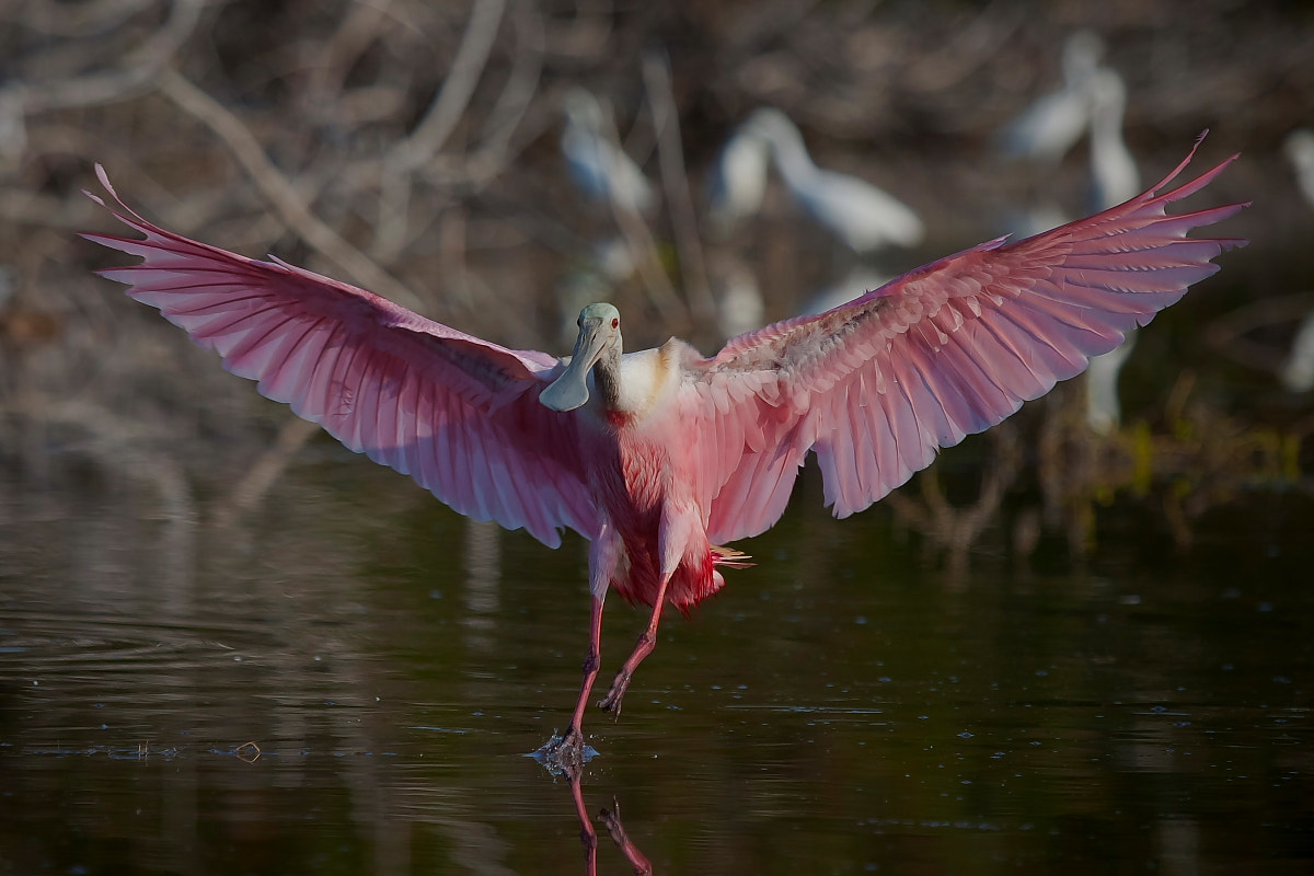 Photograph Landing by Miguel Angel Leyva on 500px