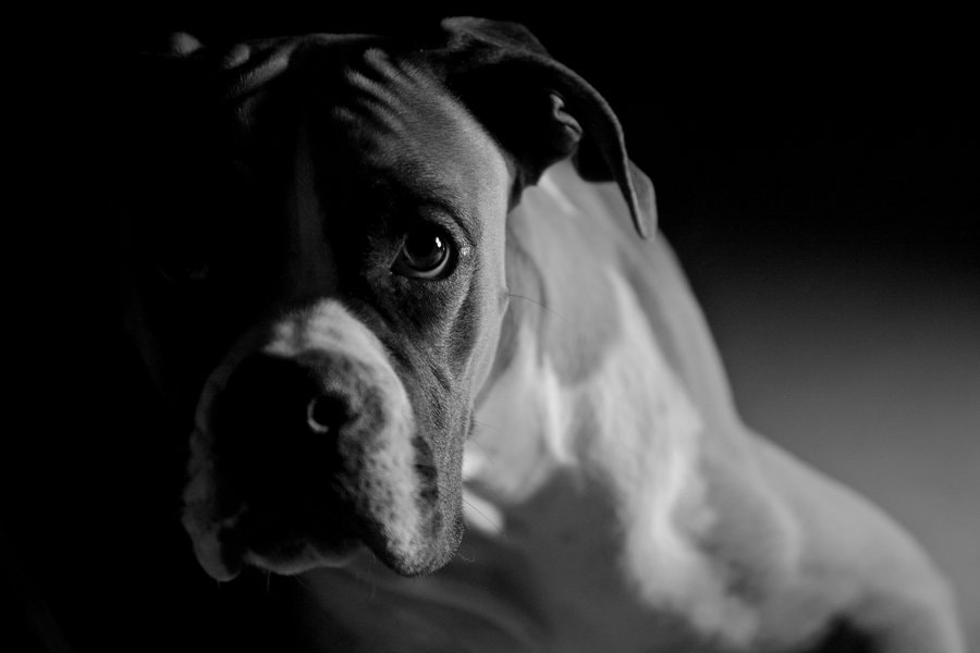 Photograph Buba in darkroom by Luis López jurado on 500px