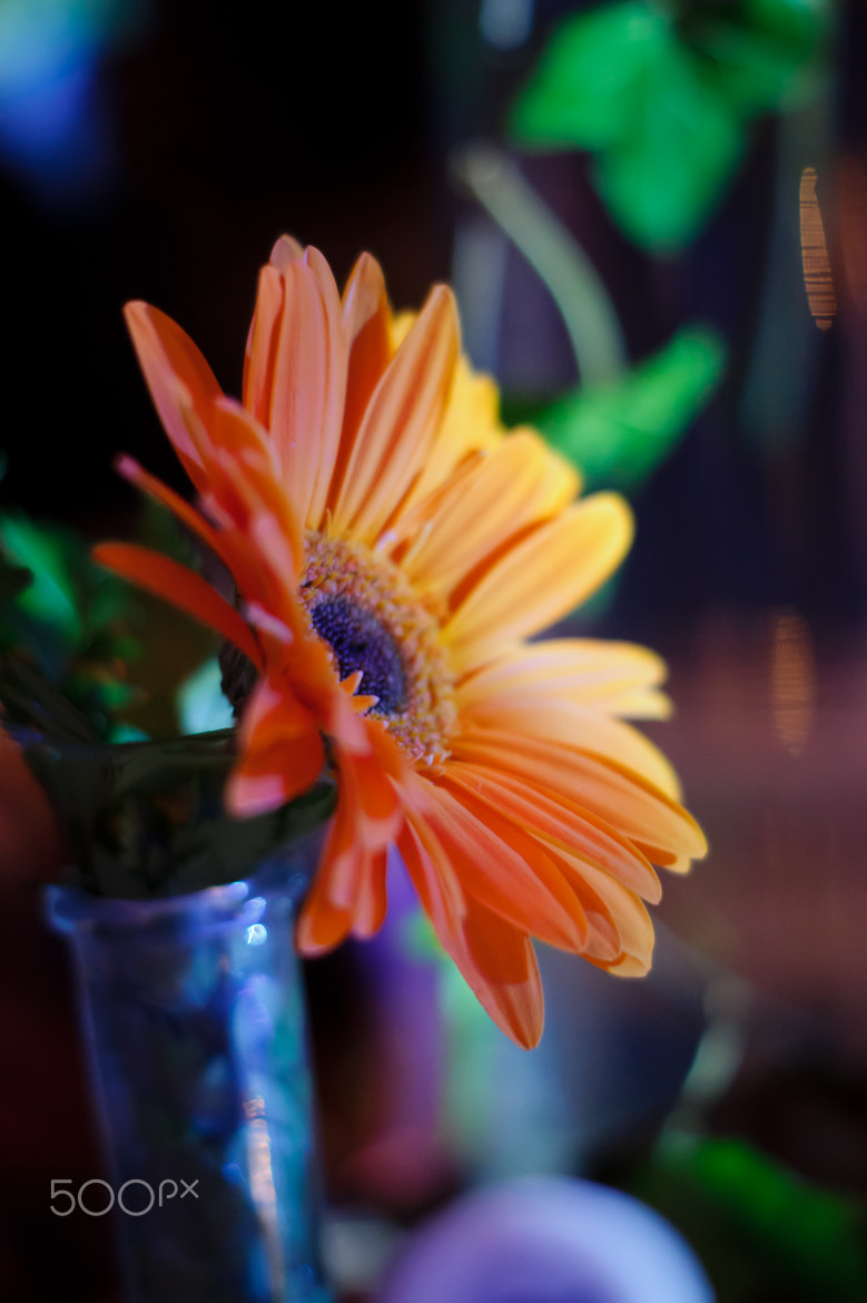 Photograph Lonely flower at the party by Vj Marod on 500px
