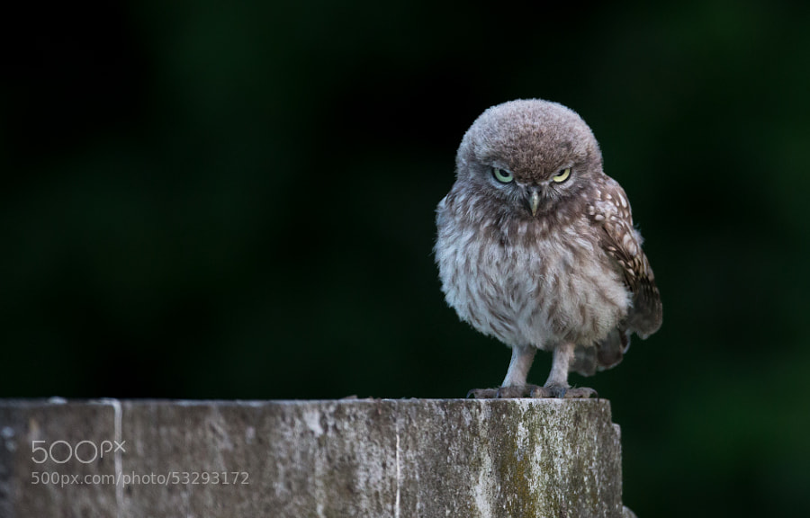 Photograph Angry Bird by Oliver Wright on 500px