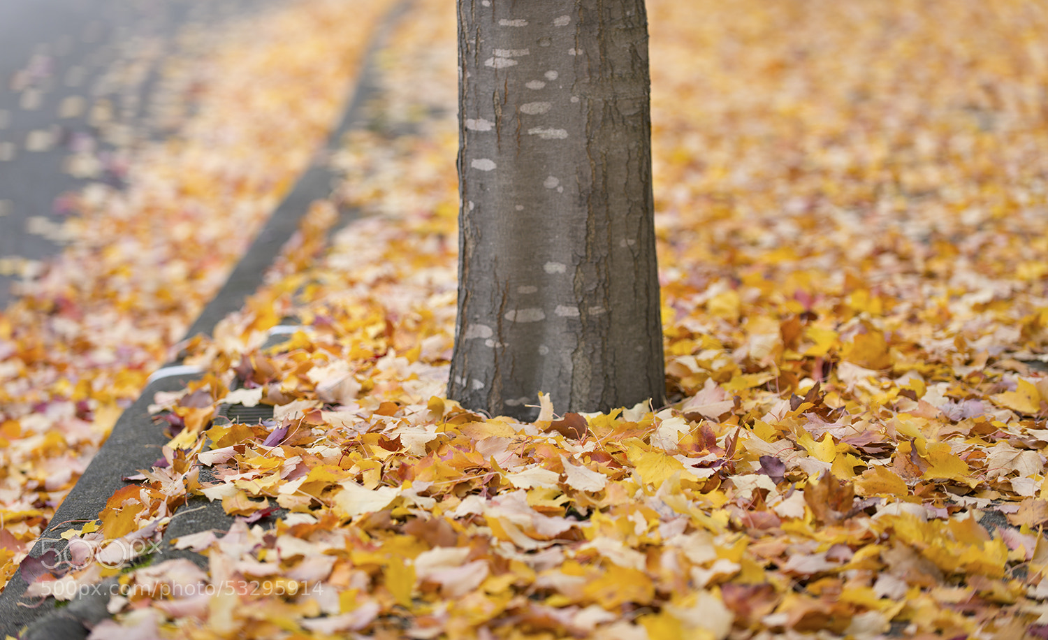 Photograph Fall by Tobias Smith on 500px