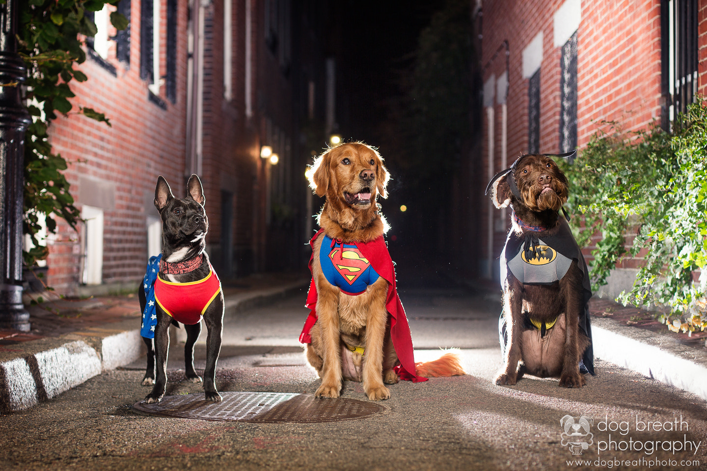 Photograph Fuzzy Superheroes by Kaylee Greer on 500px