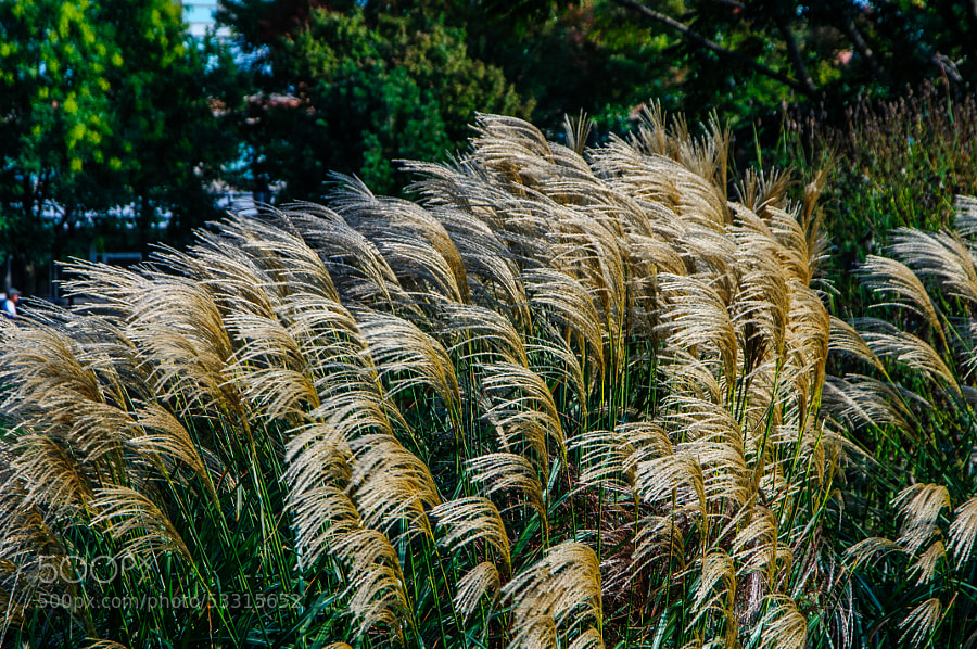 Beautiful to watch the wind play with the grass.