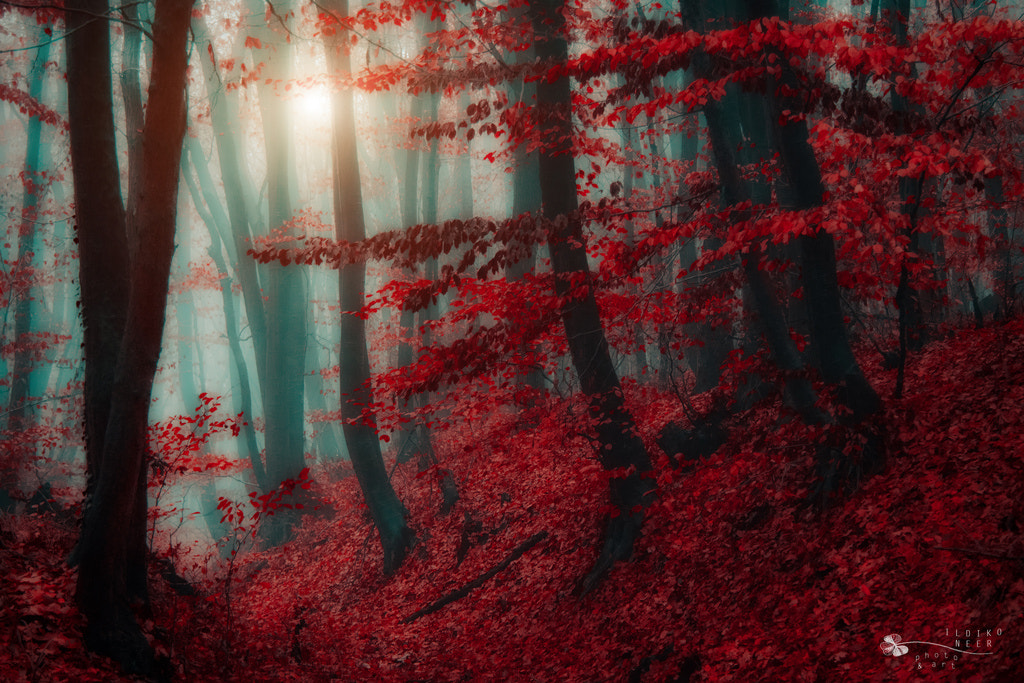 Photograph Land of Elves by Ildiko Neer on 500px
