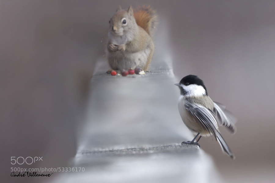 Photograph Enough for two ? by Andre Villeneuve on 500px