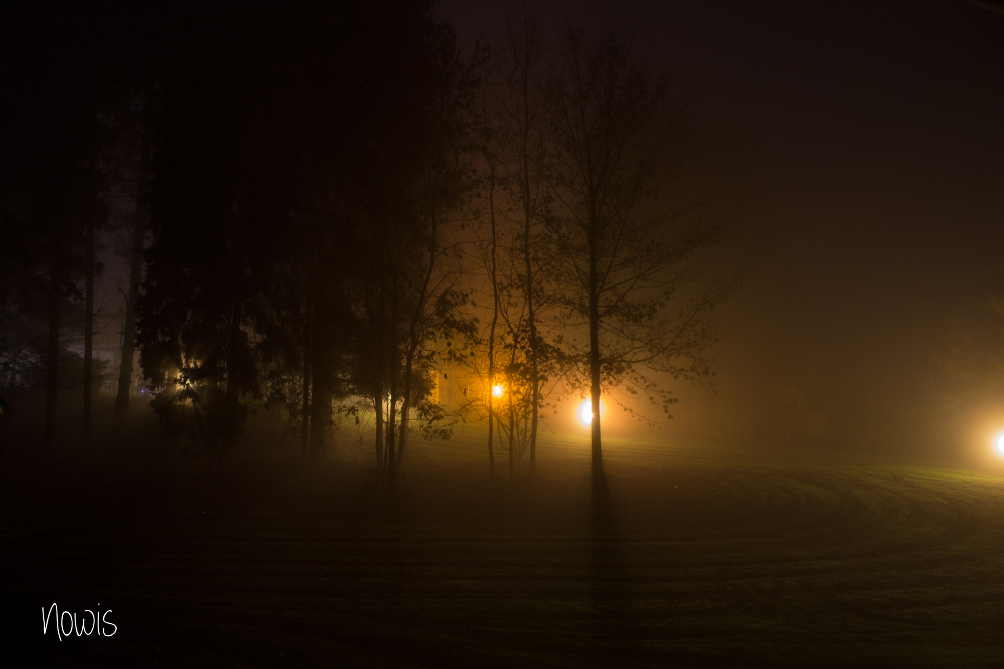 Photograph Fog, Threes and Light by Nowis on 500px