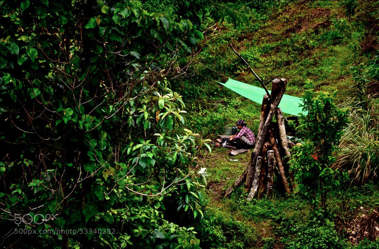 Photograph Tea Harvester Tea Break by Yasha Troubetzkoy on 500px