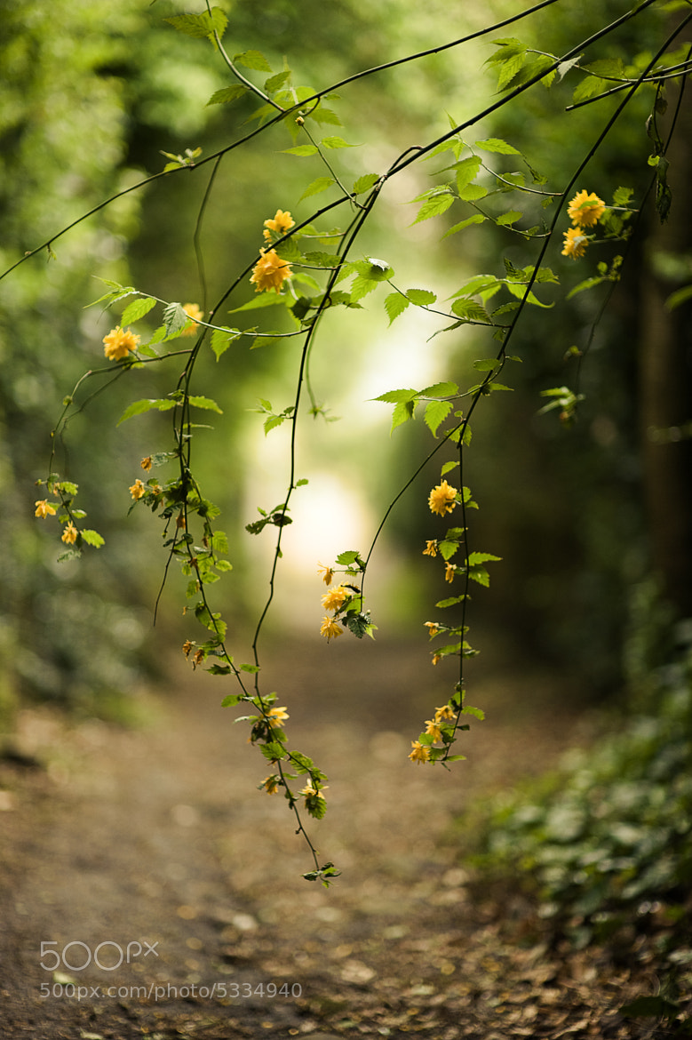Photograph sunshine by louise kay on 500px