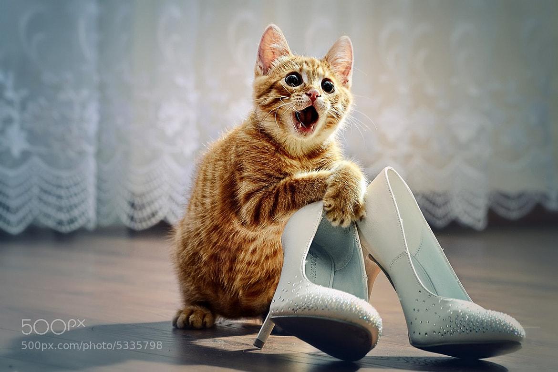 Photograph Кот на выкупе/Wedding cat by Kompaniyets Aleksander on 500px