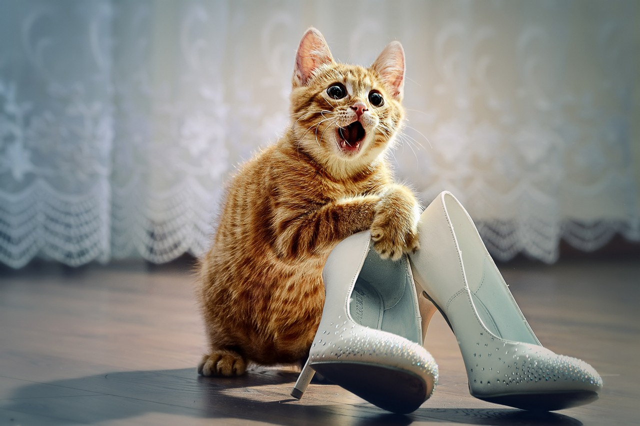 Photograph Кот на выкупе/Wedding cat by Aleksander Kompaniyets on 500px