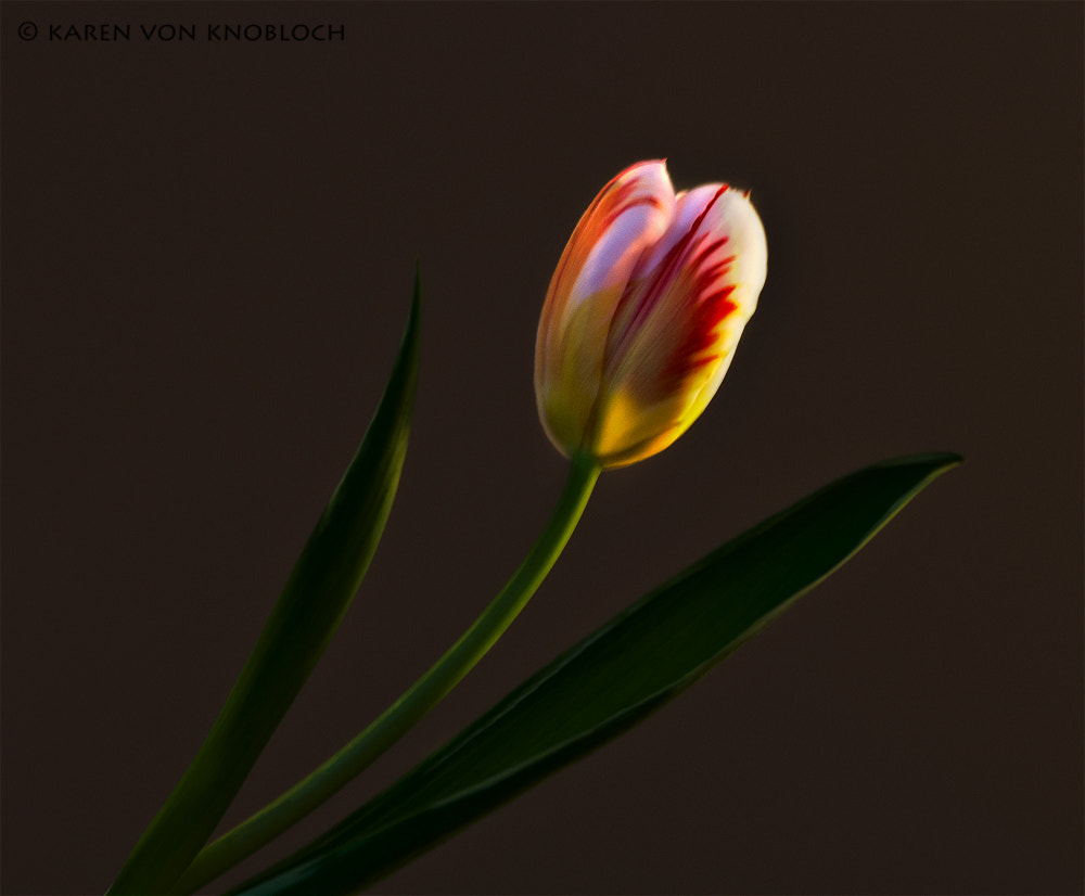 Photograph Spring Wishes by Karen von Knobloch on 500px