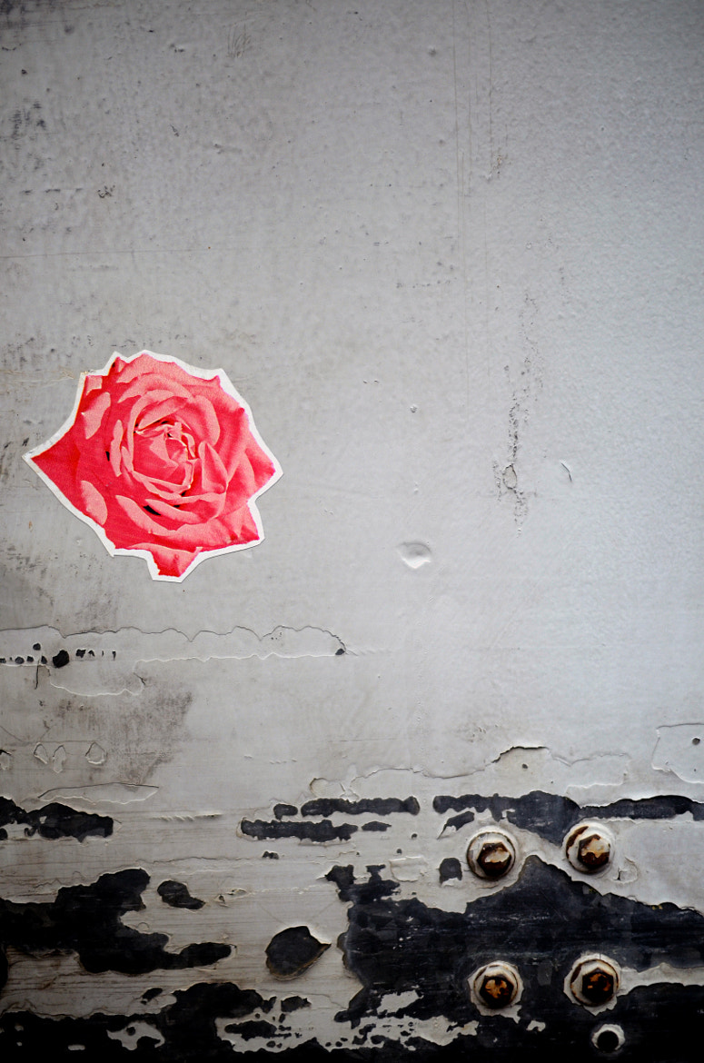 Photograph Concrete Rose by Paiden Stanley on 500px