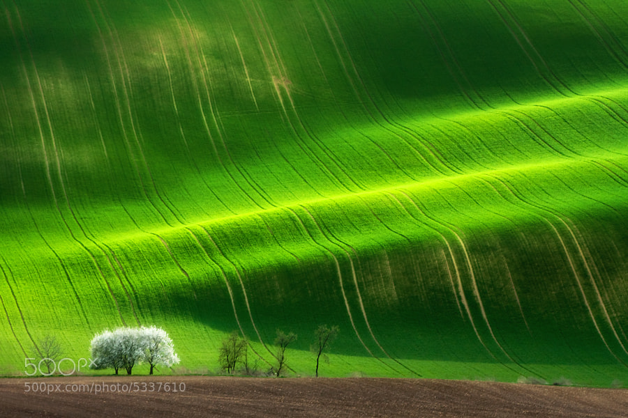 The sping tree by Marcin Sobas