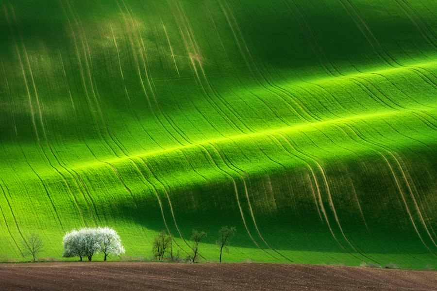 Photograph The sping tree by Marcin Sobas on 500px