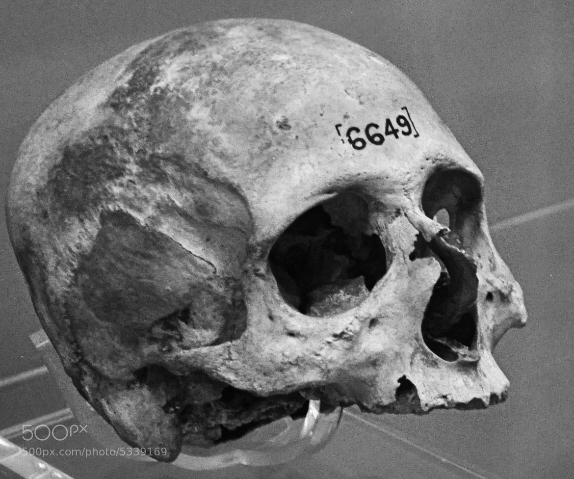 Photograph The dead by Zoe Cowl on 500px