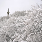 Постер, плакат: Brock Monument In The Snow Covered Trees