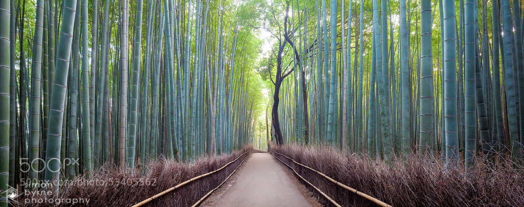 Photograph Arashiyama, Kyoto, Japan by Simon Byrne on 500px