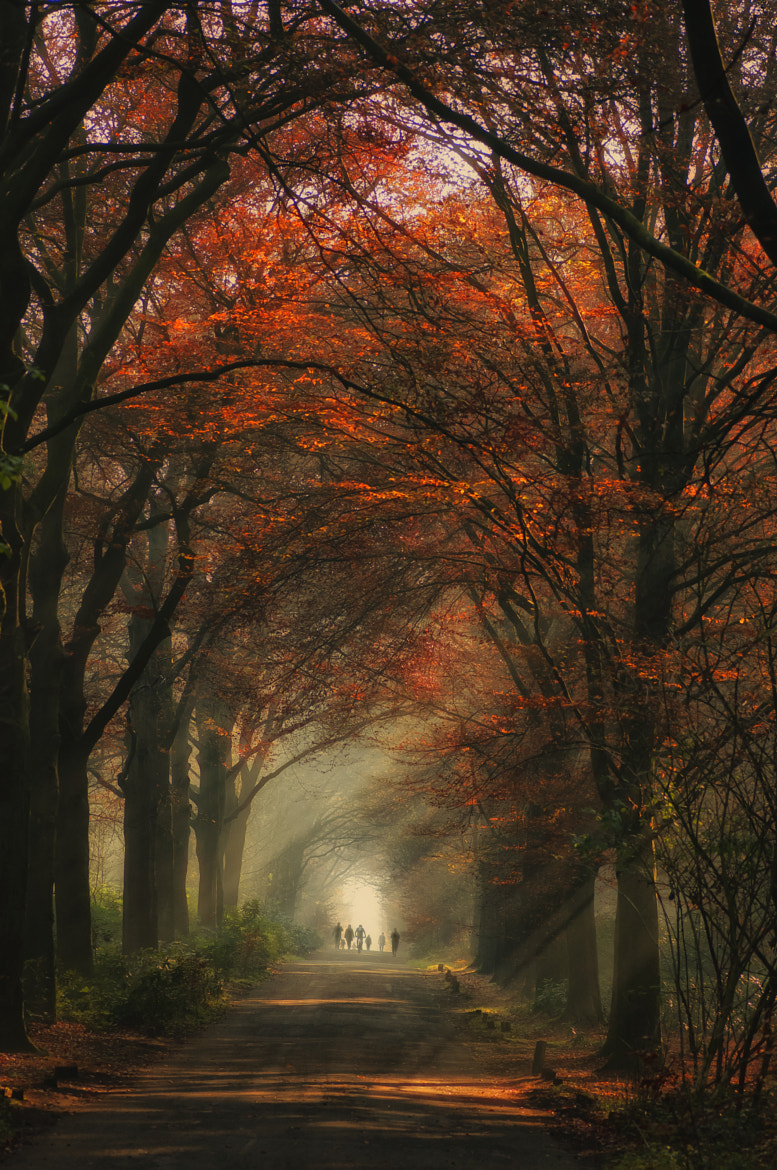 Photograph Fall stroll by Robert Broeke on 500px