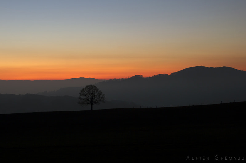 Photograph black tree by Adrien Gremaud on 500px