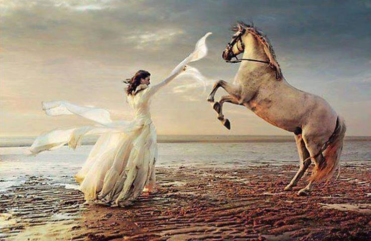 Photograph horse photography by rawwtf399 on 500px