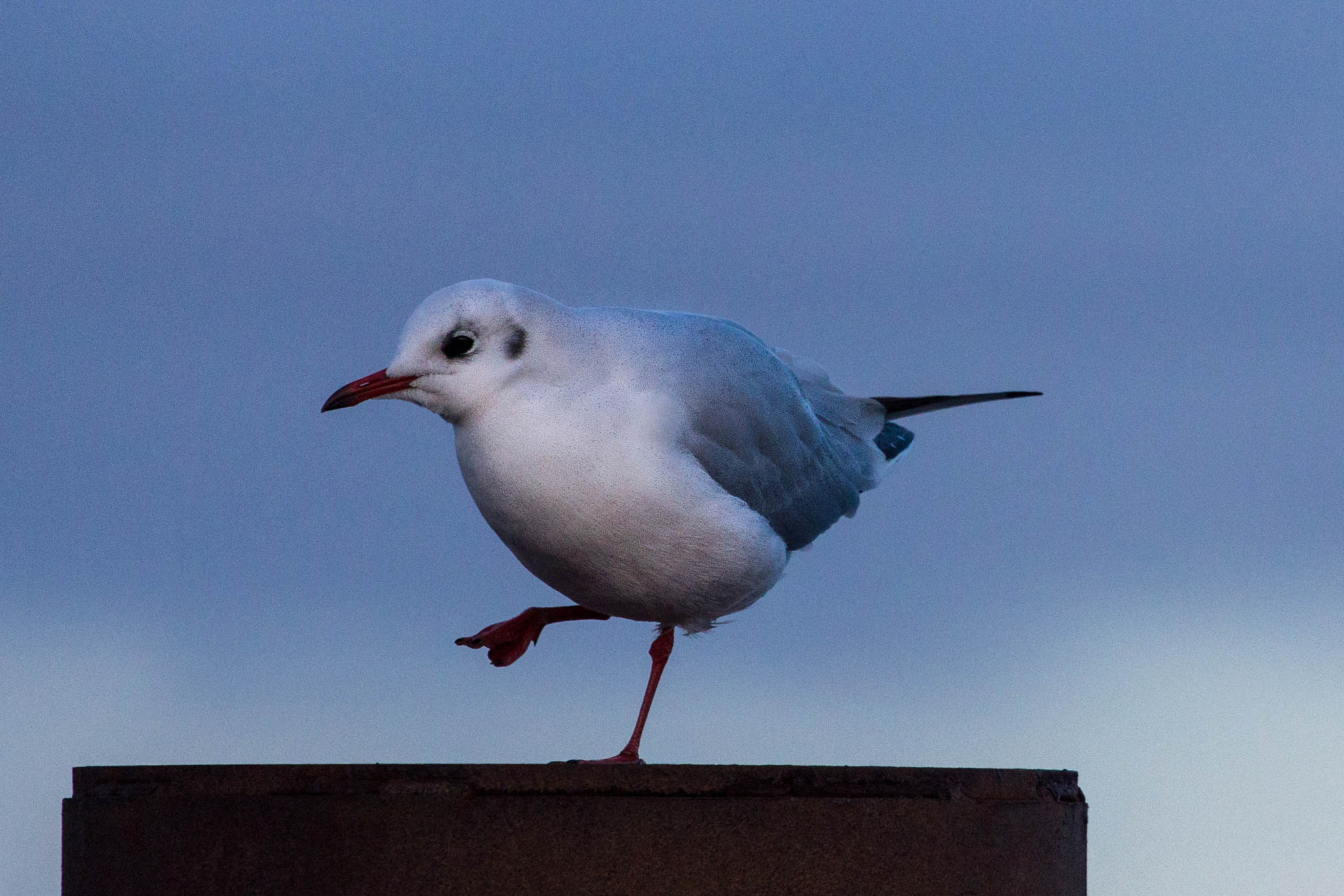 Photograph Seagull 5 by Heike Kitzig on 500px