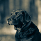 Постер, плакат: Choc Lab The Real Duke