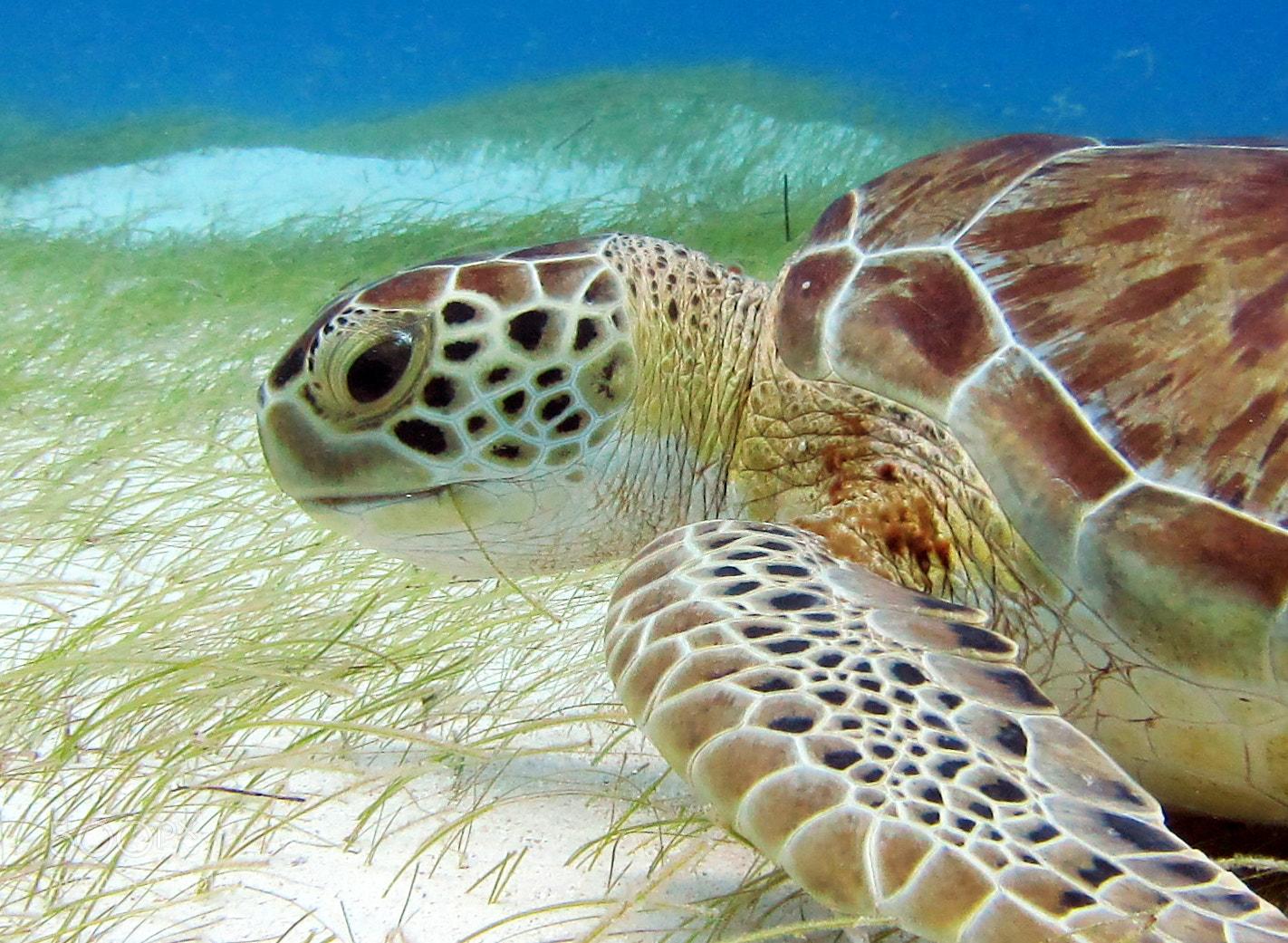 Photograph Green sea beauty by Gerardo Aizpuru on 500px