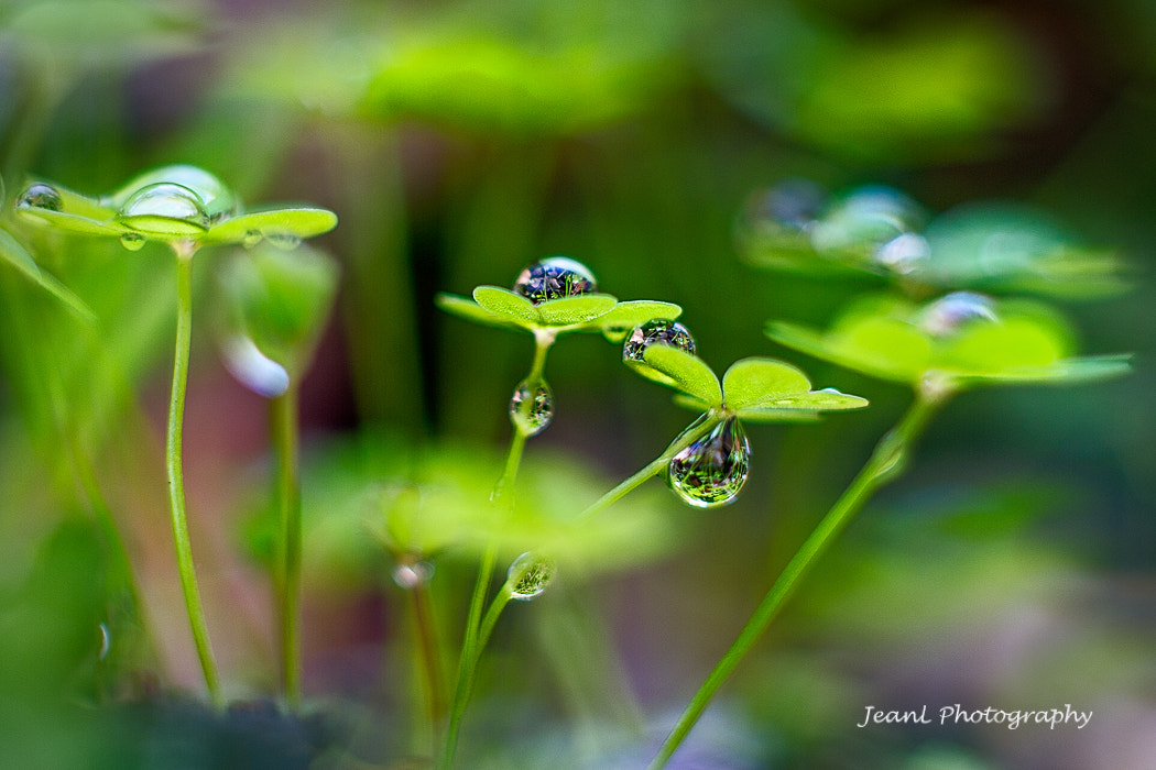 Photograph Lucky dew by Jean Li on 500px