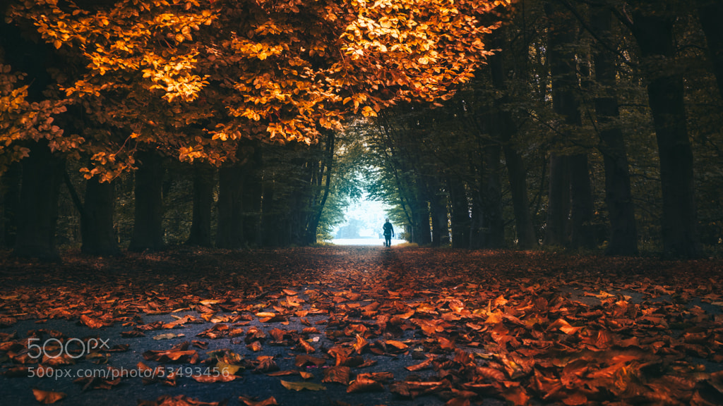 Photograph Back from antoher world by Bastien HAJDUK on 500px
