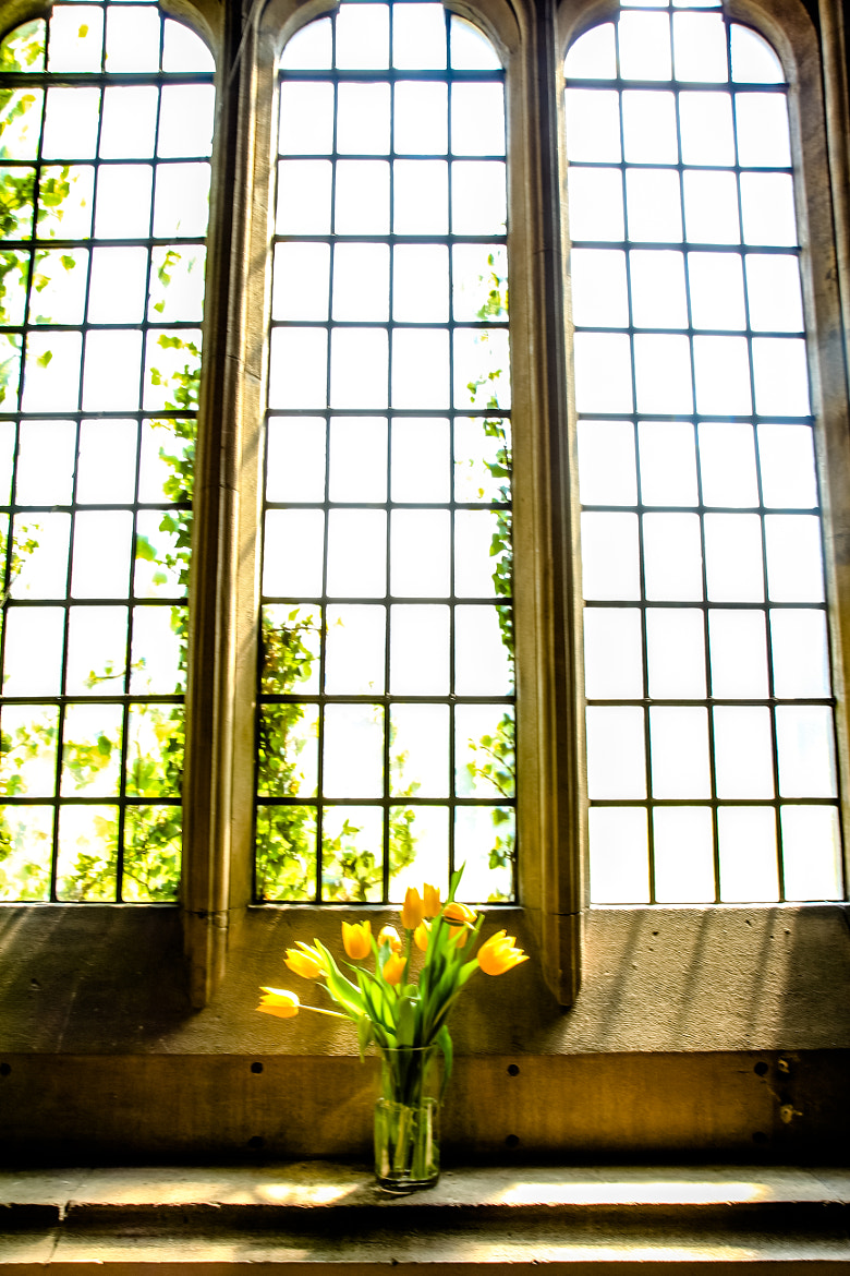 Photograph Window Light by Leigh  Bloomfield on 500px