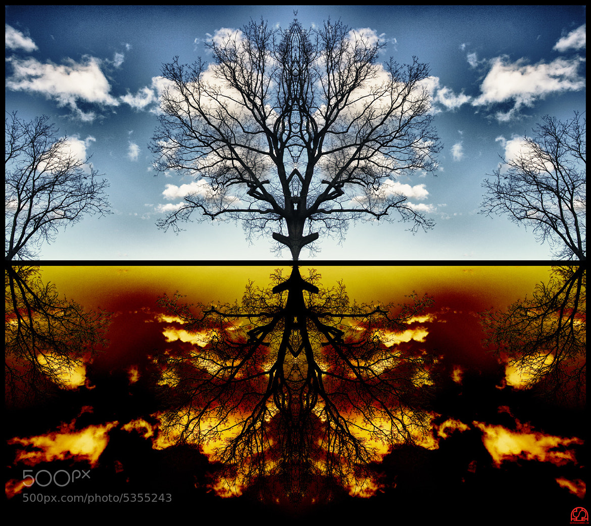 Photograph a tree by Sergej Dimmel on 500px
