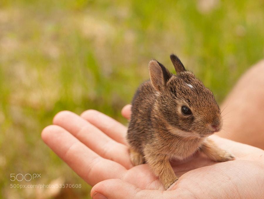 Photograph Little guy by Katt Talsma on 500px
