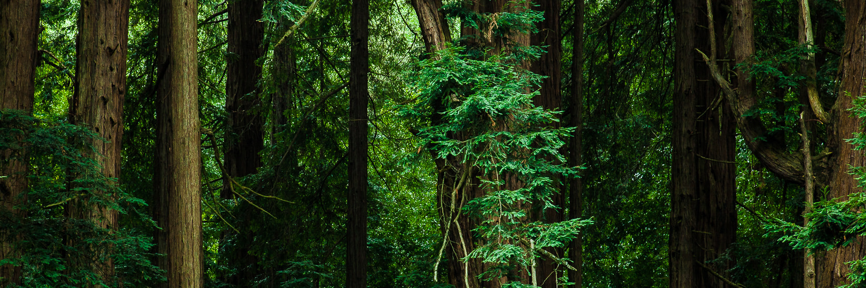 Photograph Woods by Mike Wiacek on 500px