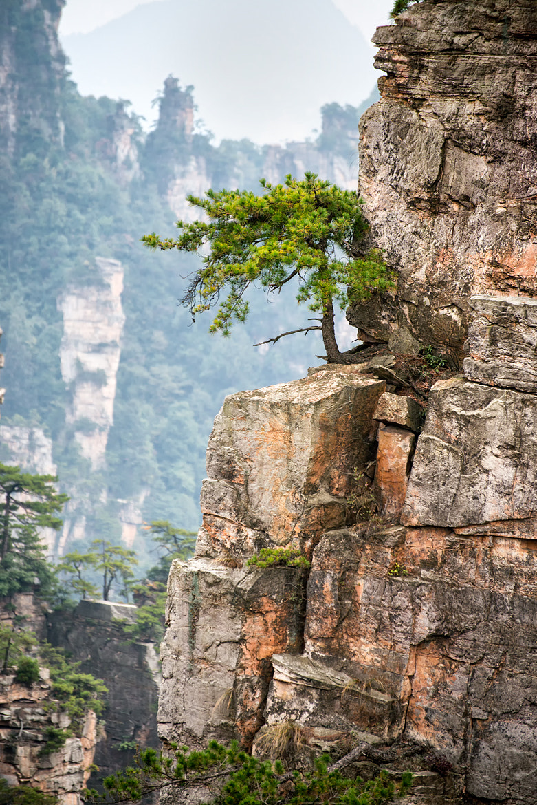 Photograph Trees grow on a stone too by Anton  on 500px