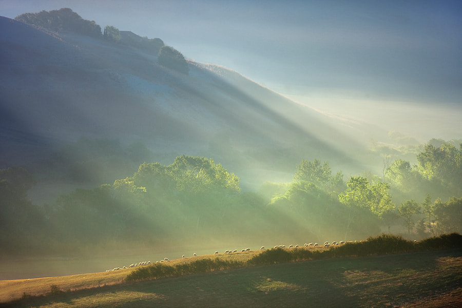 Photograph Herd under the hill by Marcin Sobas on 500px