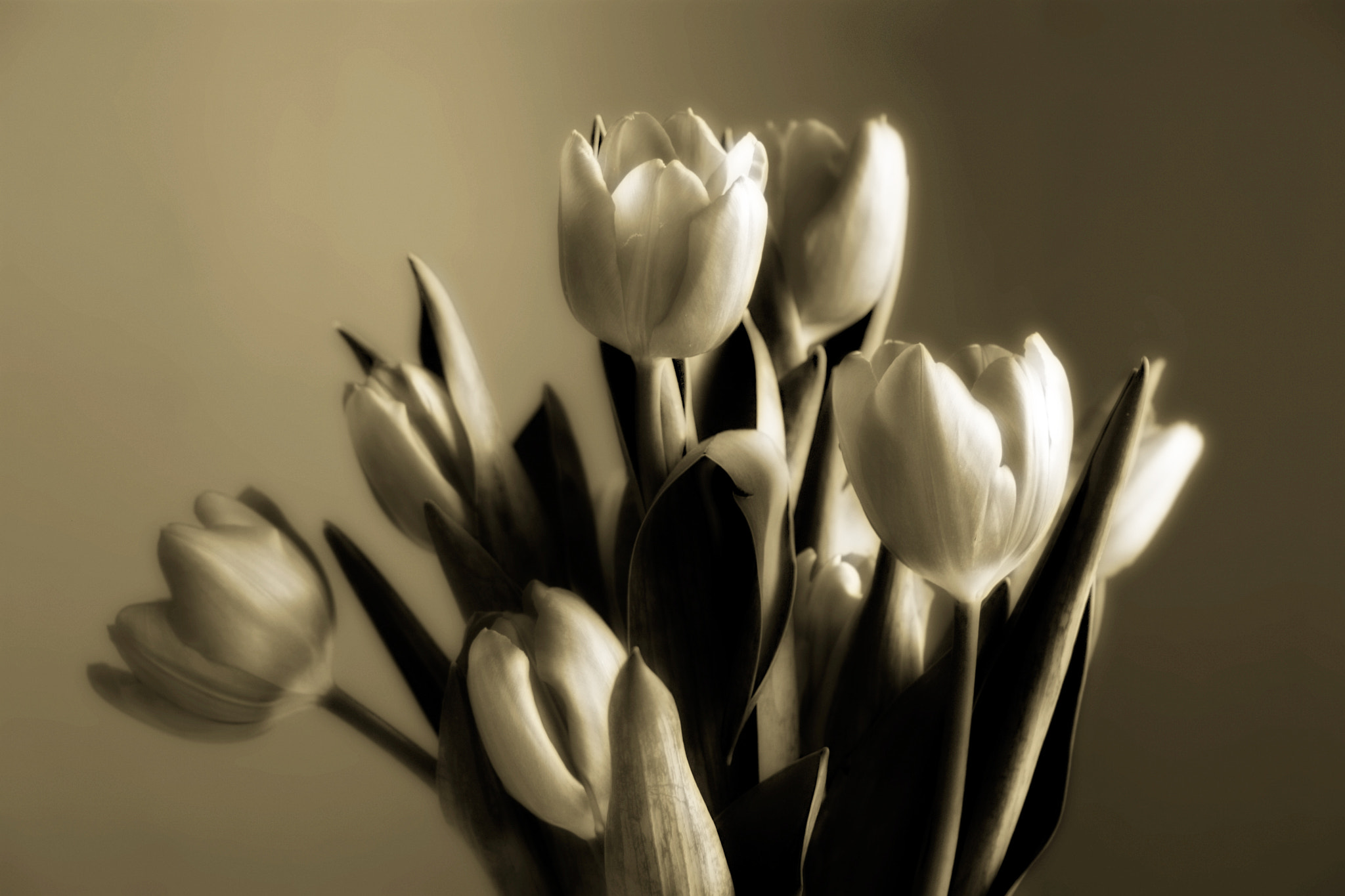 Photograph Tulips by Rob Kunz on 500px