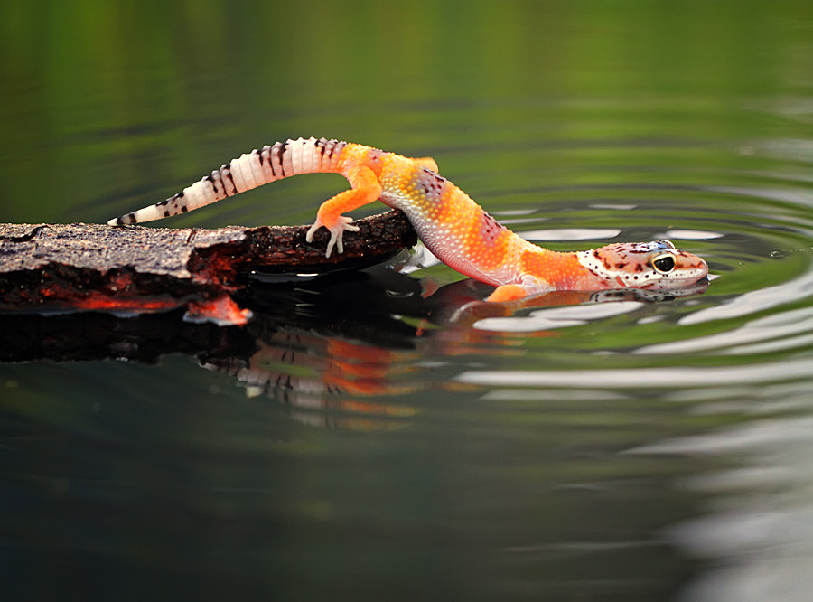 Photograph swimming by shikhei goh on 500px