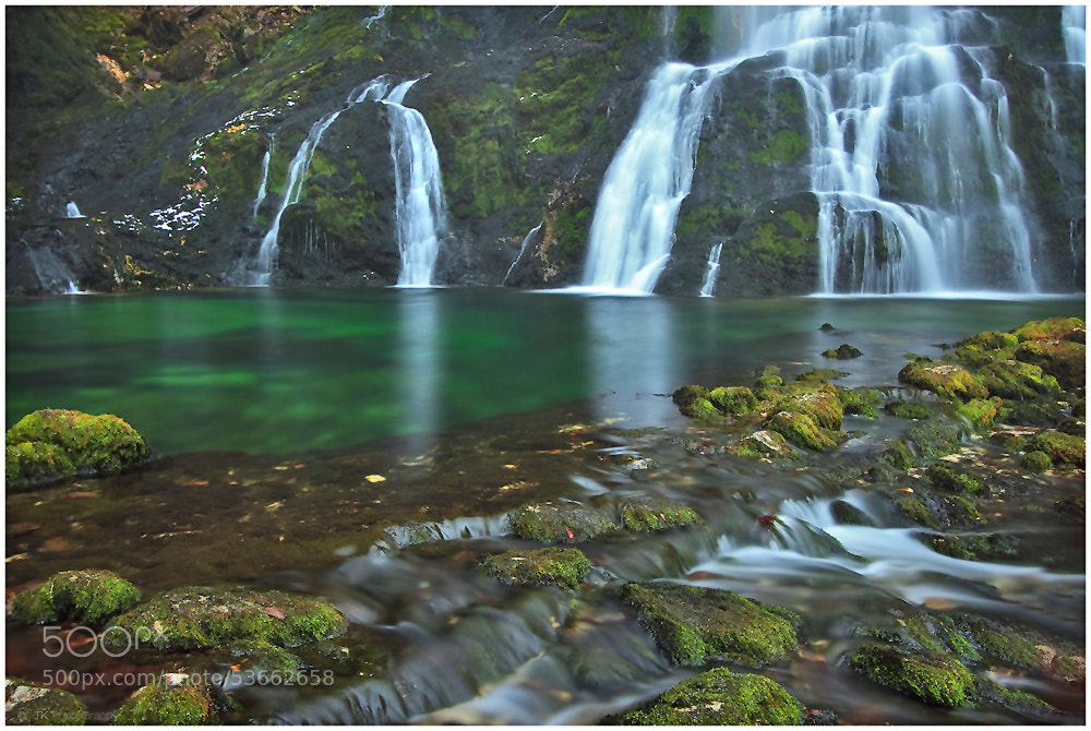Photograph Shades of Green by Tobi K on 500px