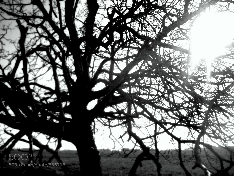 Photograph Le soleil n'est jamais loin. by Angélique Cynthia on 500px