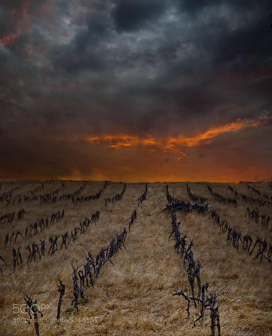 Photograph vines by shane schilders on 500px
