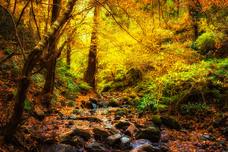 The brook of autumn