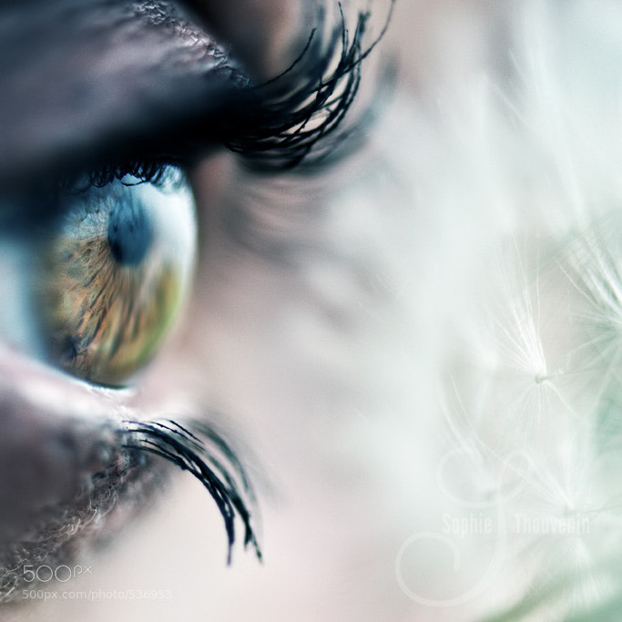 Photograph dandelion's eye by sophie thouvenin on 500px