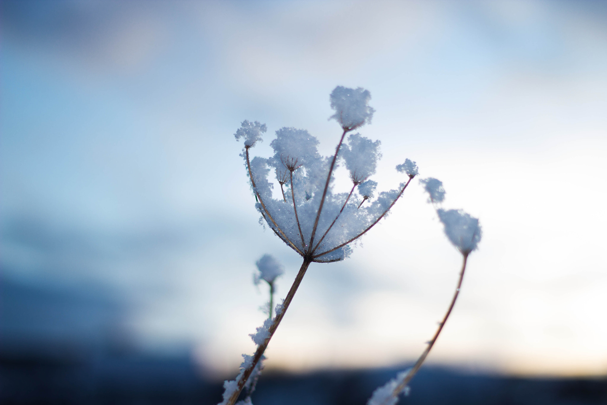 Photograph Plant with snow by Heike Kitzig on 500px