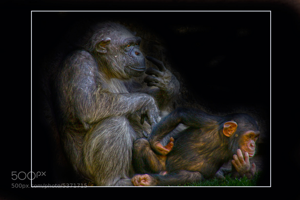 Photograph familia by juan  rodrigo legua on 500px